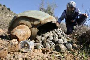 Unexploded Cluster Munitions